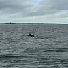 Jekyll Island Boat Tours Dolphin 06-19-19