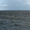 Jekyll Island Boat Tours Dolphin 06-20-19