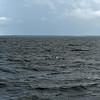 Dolphin-f5279