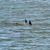 Jekyll Island Boat Tours Dolphin 06-22-19