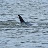 Dolphin Tour - Jekyll Island Boat Tours 06-26-18