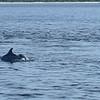 Dolphin Tour - Jekyll Island Boat Tours 06-28-18