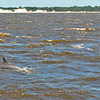 Dolphin Tour - Jekyll Island Boat Tours 07-01-18