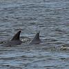 Dolphin Tour - Jekyll Island Boat Tours 07-03-18