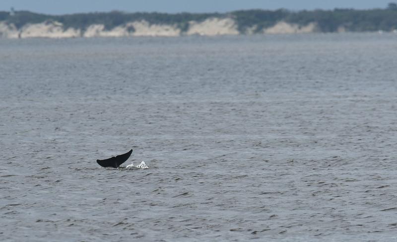 Dolphin Tour - Jekyll Island Boat Tours 07-04-18