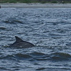Dolphin Tour - Jekyll Island Boat Tours 07-04-18