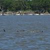 Dolphin Tour - Jekyll Island Boat Tours 07-05-18