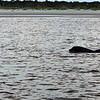 Dolphin Tour - Jekyll Island Boat Tours 07-07-18