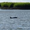 Jekyll Island Boat Tours Dolphin 07-10-19