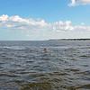 Jekyll Island Boat Tours Dolphin Daze Dolphin 07-13-20
