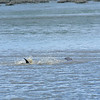 Dolphin-f9233