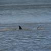 Jekyll Island Boat Tours  Dolphin Mudding 07-26-18