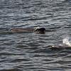 Jekyll Island Boat Tours  Dolphin 08-26-18