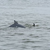 Jekyll Island Boat Tours Dolphin Tour - with Baby 04-22-18