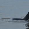 Dolphin Tour - Jekyll Island Boat Tours - Dolphin Daze 07-06-18