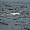 Jekyll Island Boat Tours Dolphin Daze Dolphin 05-28-20
