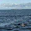 Jekyll Island Boat Tours Dolphin Daze Dolphin 06-14-20