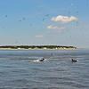 Jekyll Island Boat Tours Dolphin Daze Dolphin 06-22-20