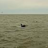 Jekyll Island Boat Tours Dolphin Daze Dolphin 06-25-20