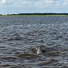 Jekyll Island Boat Tours Dolphin Daze Dolphin 07-01-20
