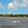 Jekyll Island Boat Tours Dolphin Daze Dolphin 07-23-20