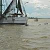 Jekyll Island Boat Tours Dolphin Daze Dolphin 07-28-20