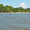Jekyll Island Boat Tours Dolphin Daze Dolphin 08-11-20