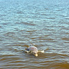 Jekyll Island Boat Tours Dolphin Daze Dolphin 08-12-20