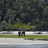 Jekyll Island Boat Tours Dolphin Daze Dolphin Horses  08-12-20