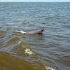 Jekyll Island Boat Tours Dolphin Daze Dolphin  09-05-20