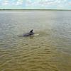 Jekyll Island Boat Tours Dolphin Daze Dolphin 06-18-20