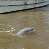 Jekyll Island Boat Tours Dolphin Daze Dolphin 06-19-20