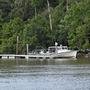 Jekyll Island Boat Tours Dolphin Daze Hawkins Creek 07-28-20