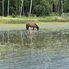 Jekyll Island Boat Tours Dolphin Daze Horse 07-28-20