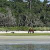 Jekyll Island Boat Tours - Dolphin Daze - Horses 08-30-20