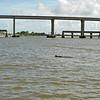 Jekyll Island Boat Tours Dolphin Daze Manatee 07-23-20