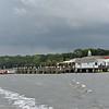 Jekyll Island Boat Tours Dolphin Daze Dolphin  08-21-20