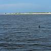 Jekyll Island Boat Tours Dolphin Daze Manta Ray 07-12-20