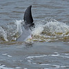 Jekyll Island Boat Tours  Dolphin Family Planning and Tour Boat 09-02-18