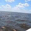 Dolphin0007