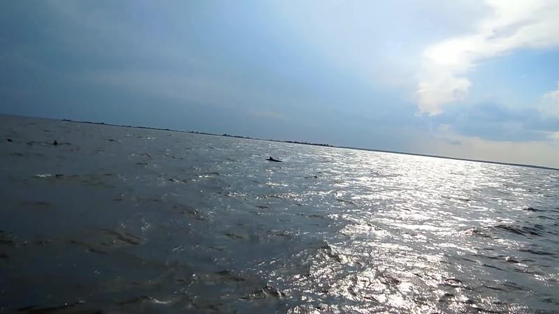 Dolphin0009