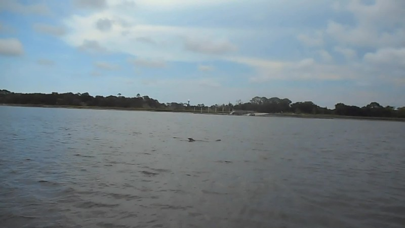 Dolphin0003