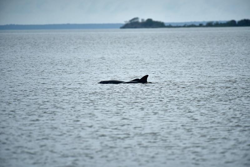 Jekyll Island Boat Tours - Dolphin and Manatee 10-29-19