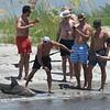 Dolphin Daze - Shark Fishing on Jekyll Point 08-03-18