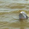 Jekyll Island Boat Tours  Dolphin 08-03-18