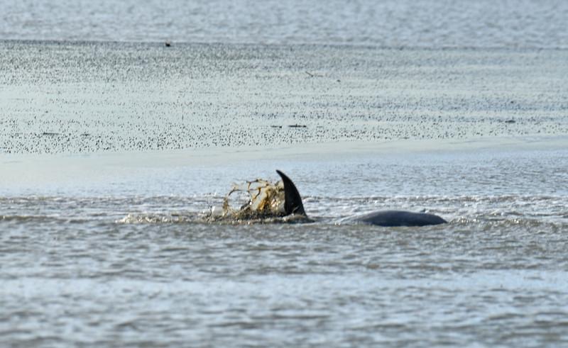Jekyll Island Boat Tours  Dolphin Mudding and Sunset 09-14-18