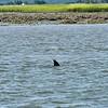 Dolphin-f6401