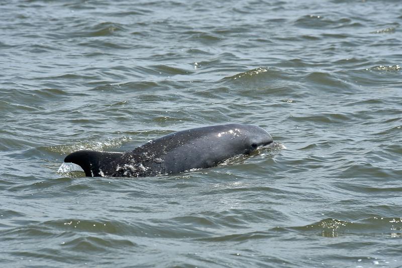 Jekyll Island Boat Tours Dolphin 07-02-19