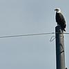 Jekyll Island Boat Tours - Eagles 10-14-19