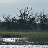 Jekyll Island Boat Tours - Eagles 10-24-19
